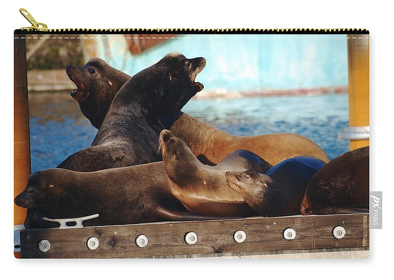 Seal Carry-all Pouch featuring the photograph Battle For The King Spot by Teri Schuster