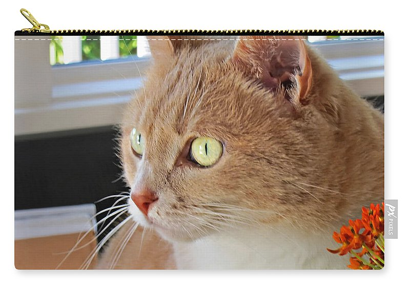 Cat Carry-all Pouch featuring the photograph Beautiful Cat With Yellow Eyes Closeup by Valerie Garner