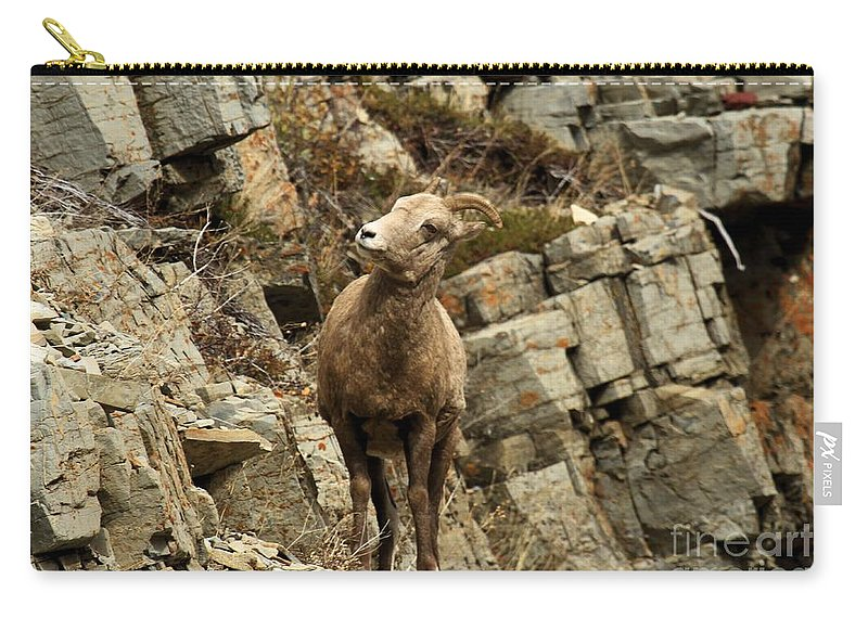 Big Horn Sheep Carry-all Pouch featuring the photograph Big Horn On The Rocks by Adam Jewell