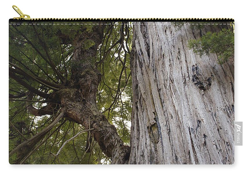 Big Tree Carry-all Pouch featuring the photograph Big Tree In Prairie Creek Redwoods State Park by Mick Anderson