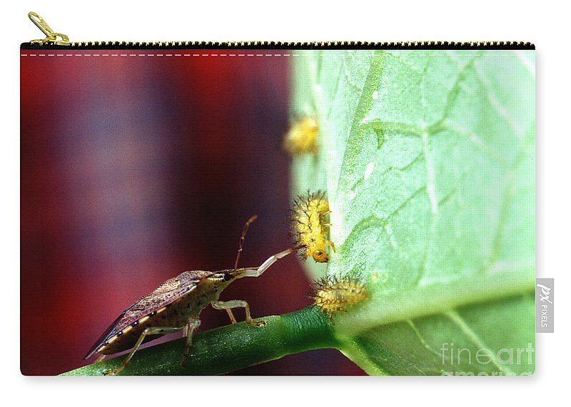 Mexican Bean Beetle Carry-all Pouch featuring the photograph Biocontrol Of Bean Beetle by Science Source