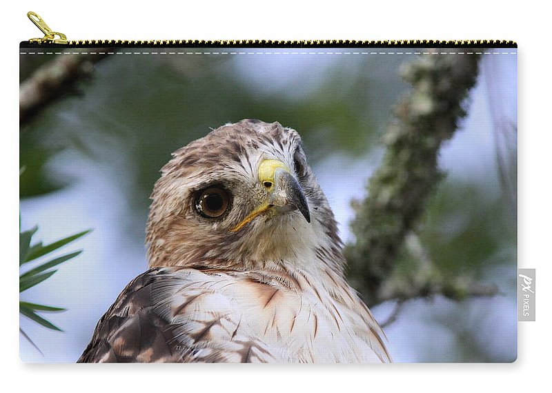 Bird Carry-all Pouch featuring the photograph Bird - Red-tailed Hawk - Bashful by Travis Truelove