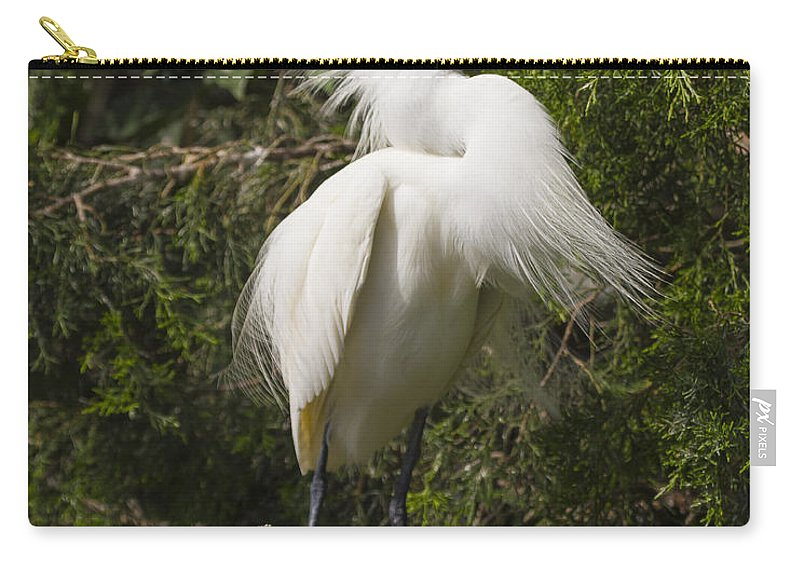 Bird Behavior Carry-all Pouch featuring the photograph Bird Mating Display - Snowy Egret by Bill Swindaman
