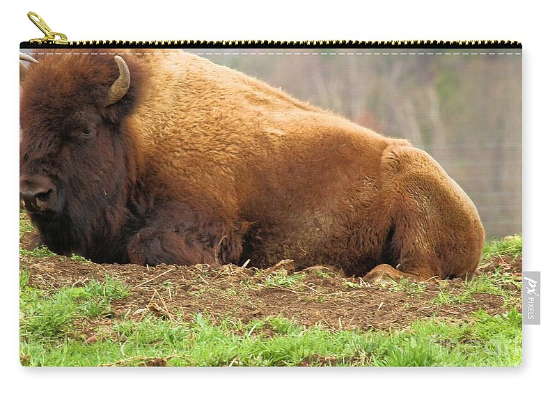 Bison Carry-all Pouch featuring the photograph Bison At Rest by Adam Jewell
