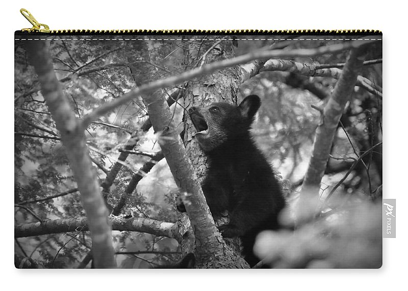 Black Bear Cub Carry-all Pouch featuring the photograph Black Bear Cub by Todd Hostetter