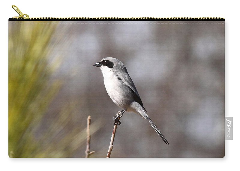 Loggerhead Shrike Carry-all Pouch featuring the photograph Black Mask by Travis Truelove