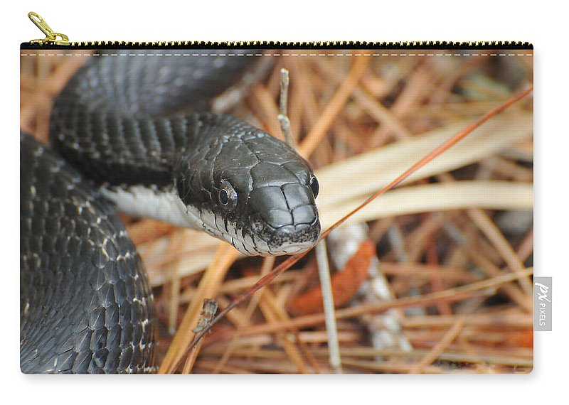 Snake Carry-all Pouch featuring the photograph Black Snake by Paul Ward