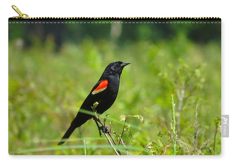 Black Carry-all Pouch featuring the photograph Blackbird by Art Dingo