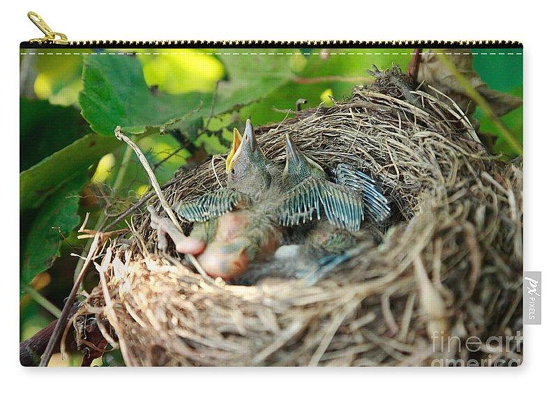 Animals Carry-all Pouch featuring the photograph Blackbird Nest by Gaspar Avila