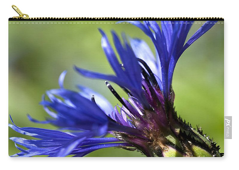 Cornflower Bud Carry-all Pouch featuring the photograph Blue Cornflower by Steve Purnell