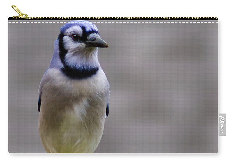 Blue Carry-all Pouch featuring the photograph Blue Jay In The Pine by LeeAnn McLaneGoetz McLaneGoetzStudioLLCcom