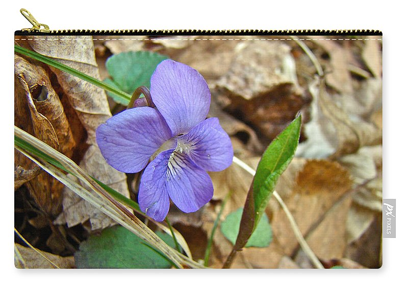 Wildflower Carry-all Pouch featuring the photograph Blue Violet Wildflower - Viola Spp by Mother Nature