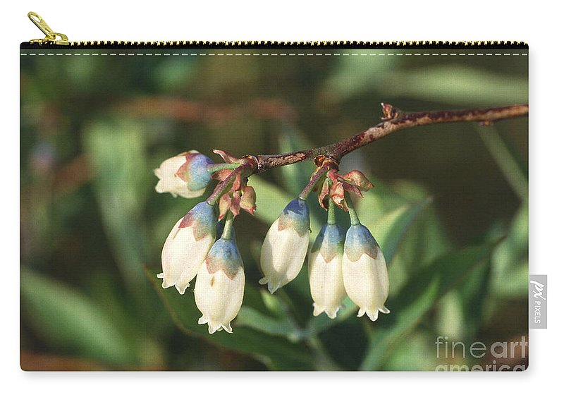 Ericaceae Carry-all Pouch featuring the photograph Blueberry Flowers by Science Source