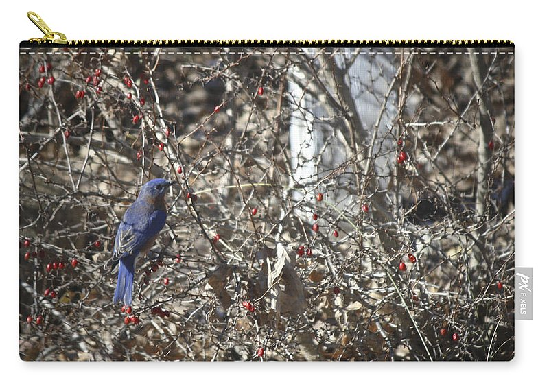 Bluebird Carry-all Pouch featuring the photograph Bluebird In Barberries Squared by Teresa Mucha