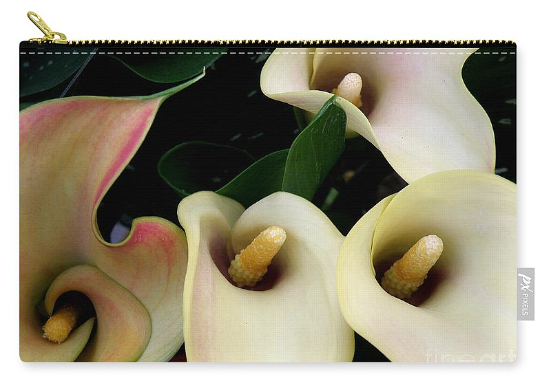 Lilies Carry-all Pouch featuring the photograph Blushing Calla Lilies by Lainie Wrightson