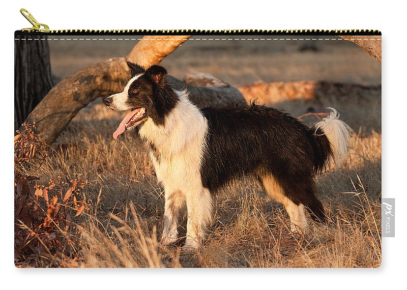 Border Collie Carry-all Pouch featuring the photograph Border Collie At Sunset by Michelle Wrighton