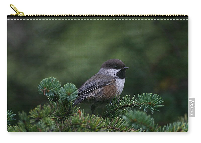 Alaska Carry-all Pouch featuring the photograph Boreal Chickadee by Doug Lloyd