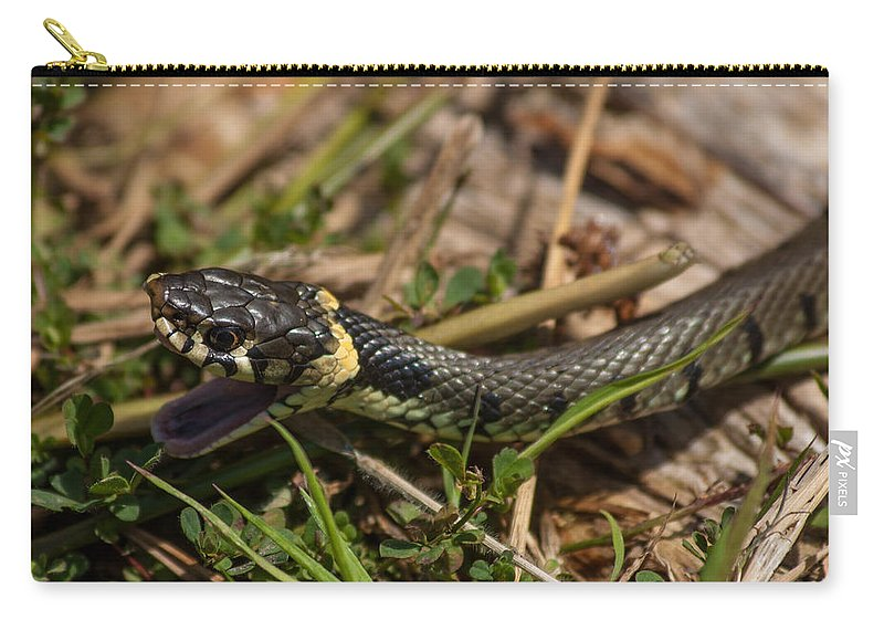 British Grass Snake Carry-all Pouch featuring the photograph British Grass Snake by Dawn OConnor
