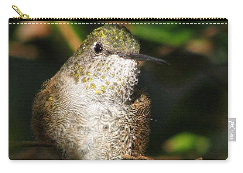 Broadbill Hummingbird Carry-all Pouch featuring the photograph Broadbill Hummingbird by Patricia Blake