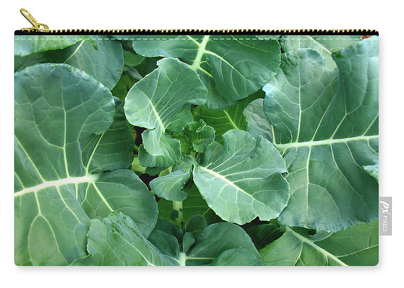 Fresh Carry-all Pouch featuring the photograph Broccoli Floret Forming by Connie Fox