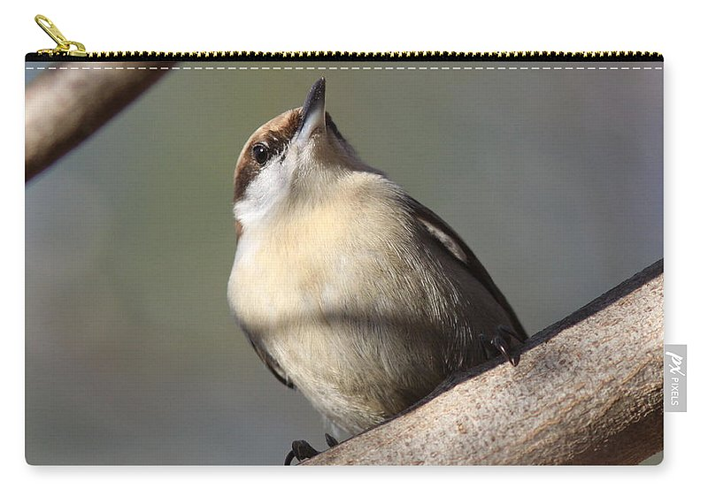 Brown-headed Nuthatch Carry-all Pouch featuring the photograph Brown And Tan by Travis Truelove
