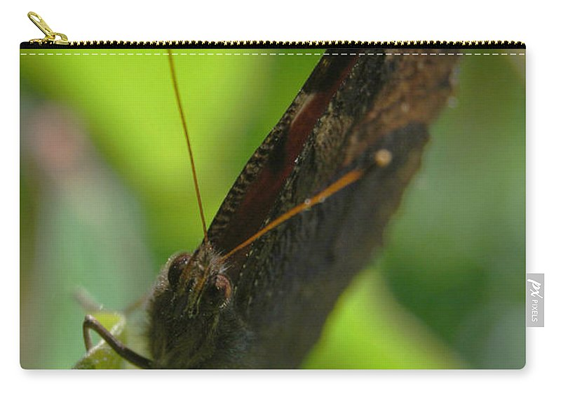 Yhun Suarez Carry-all Pouch featuring the photograph Brown Butterfly by Yhun Suarez