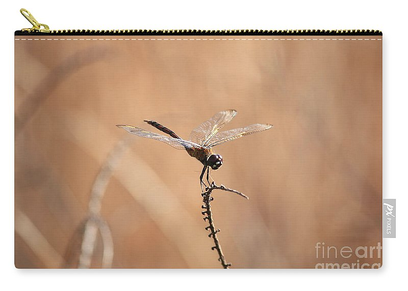 Dragonfly Carry-all Pouch featuring the photograph Brown Dragonfly And Brown Reeds by Carol Groenen