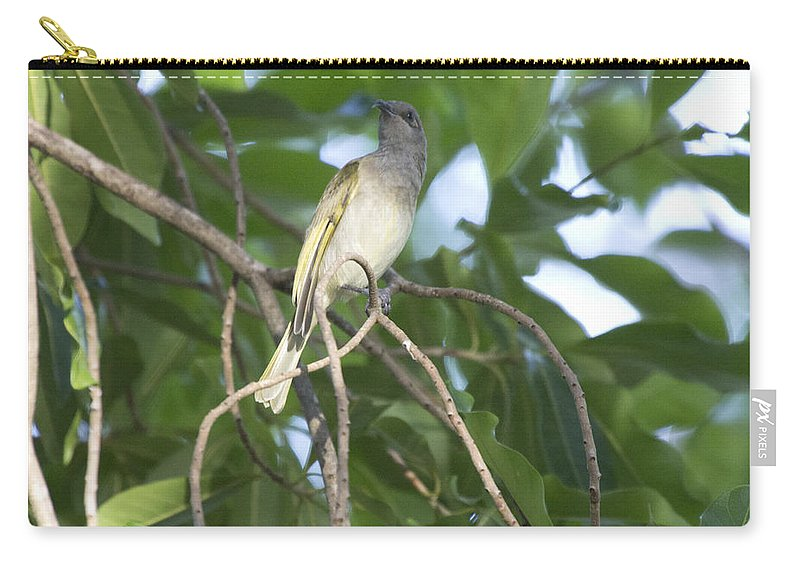 Brown Honeyeater Carry-all Pouch featuring the photograph Brown Honeyeater by Douglas Barnard