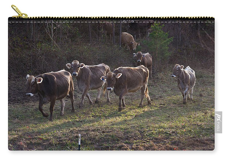 Brown Carry-all Pouch featuring the photograph Brown Swiss Cows Coming Home by Douglas Barnett