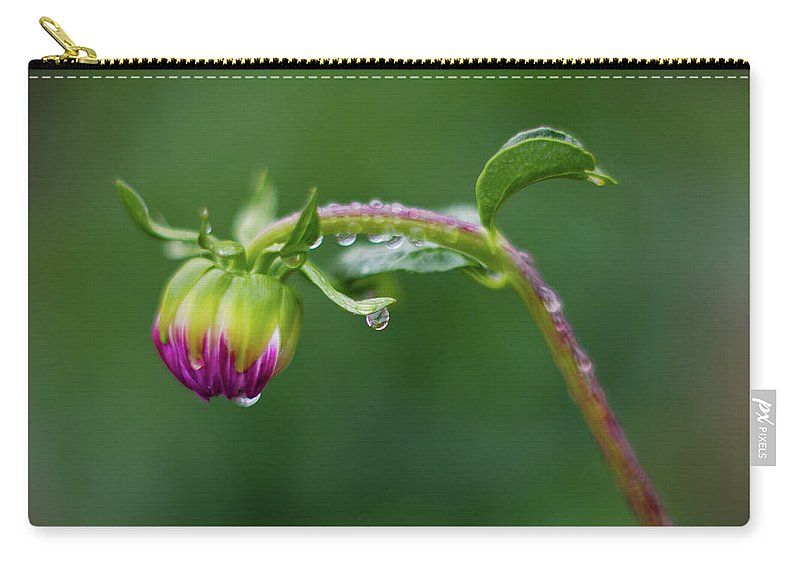 Close-up Photography Carry-all Pouch featuring the photograph Bud With Drops by Greg Nyquist