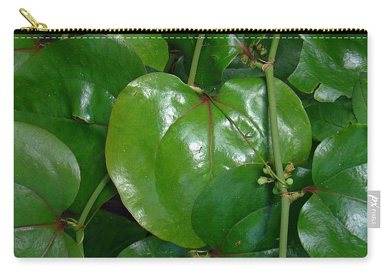 Briar Carry-all Pouch featuring the photograph Bull Briar - Cat Briar - Smilax by Mother Nature