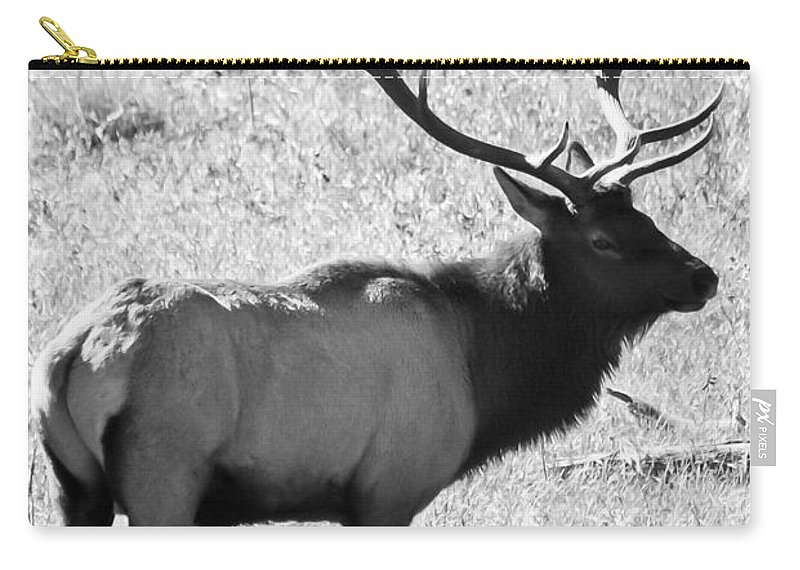 Elk Carry-all Pouch featuring the photograph Bull Elk by Colleen Coccia