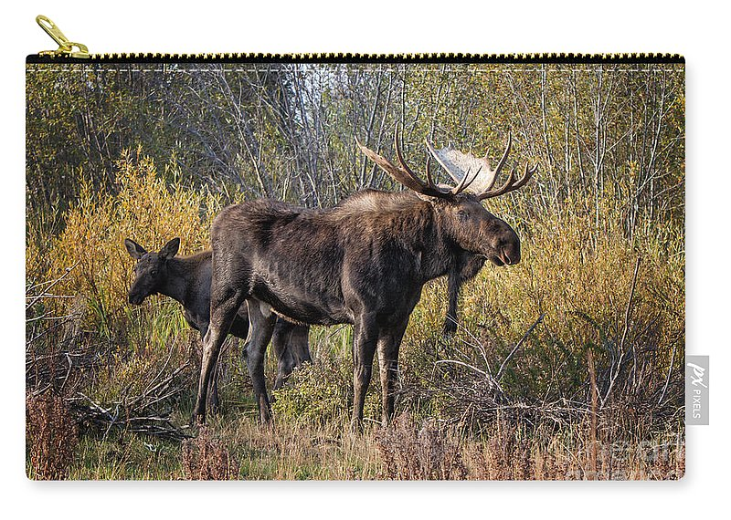 2012 Carry-all Pouch featuring the photograph Bull Tolerates Calf by Ronald Lutz