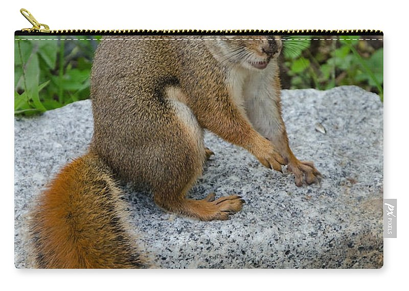 Squirrel Carry-all Pouch featuring the photograph Bushy Tail II by Jeff Galbraith