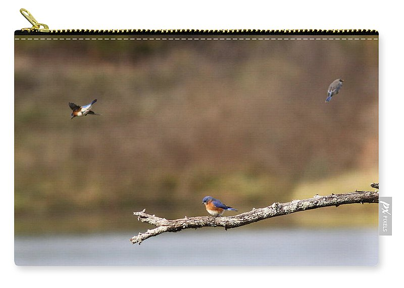 Nature Carry-all Pouch featuring the photograph Busy Bluebirds - Three Overlooking The Lake by Travis Truelove