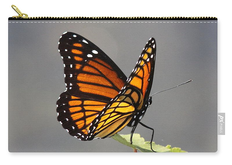 Viceroy Carry-all Pouch featuring the photograph Butterfly - Sitting On The Green by Travis Truelove