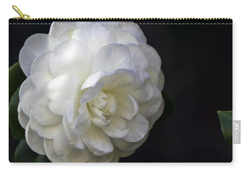 Camellia Carry-all Pouch featuring the photograph Camellia  Twelve  by Ken Frischkorn