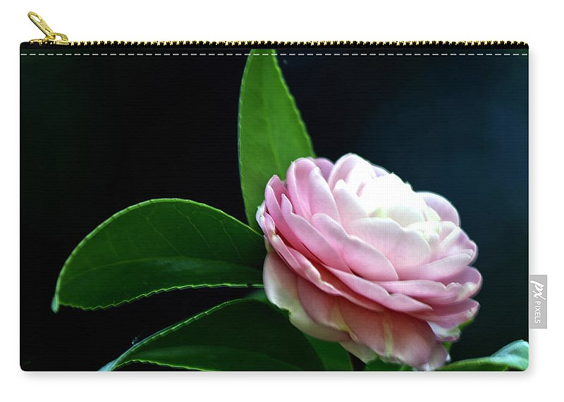 Camellia Carry-all Pouch featuring the photograph Camellia Twenty-four by Ken Frischkorn