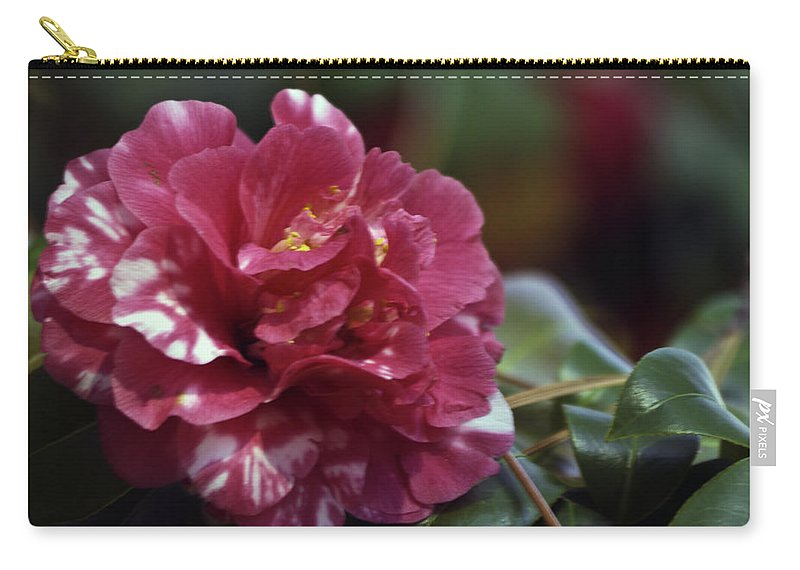 Camellia Carry-all Pouch featuring the photograph Camellia Twenty-one by Ken Frischkorn