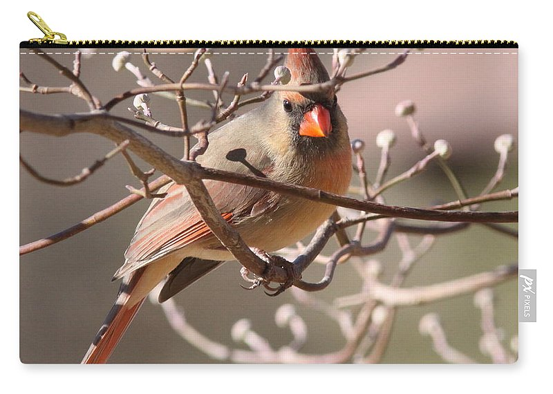 Carry-all Pouch featuring the photograph Can't Hide Class by Travis Truelove