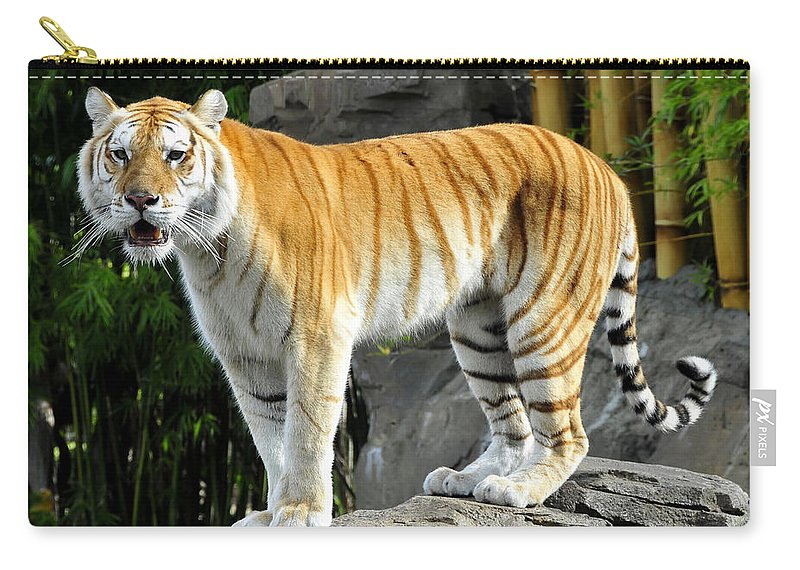 Fine Art Photography Carry-all Pouch featuring the photograph Cat On The Rocks by David Lee Thompson