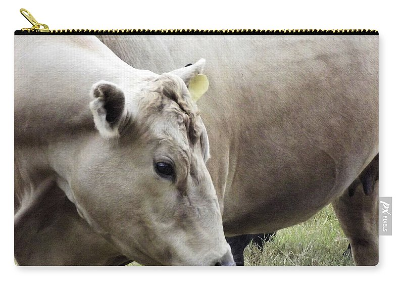 Cow Carry-all Pouch featuring the photograph Catch My Good Side by Jennifer Stockman
