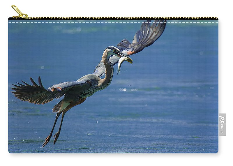 Great Blue Heron Carry-all Pouch featuring the photograph Catch Of The Day by Sebastian Musial
