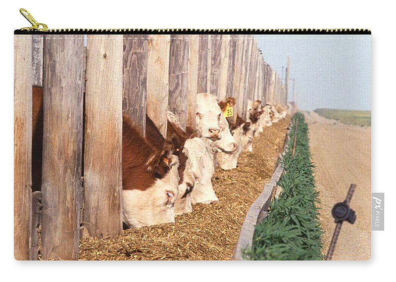 Cow Carry-all Pouch featuring the photograph Cattle Feeding by Photo Researchers