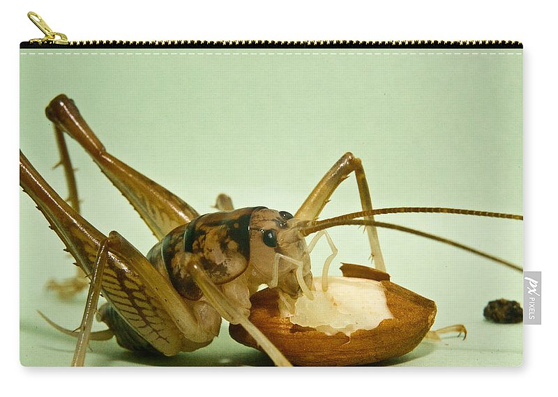 Orthopteran Carry-all Pouch featuring the photograph Cave Cricket Feeding On Almond 8 by Douglas Barnett