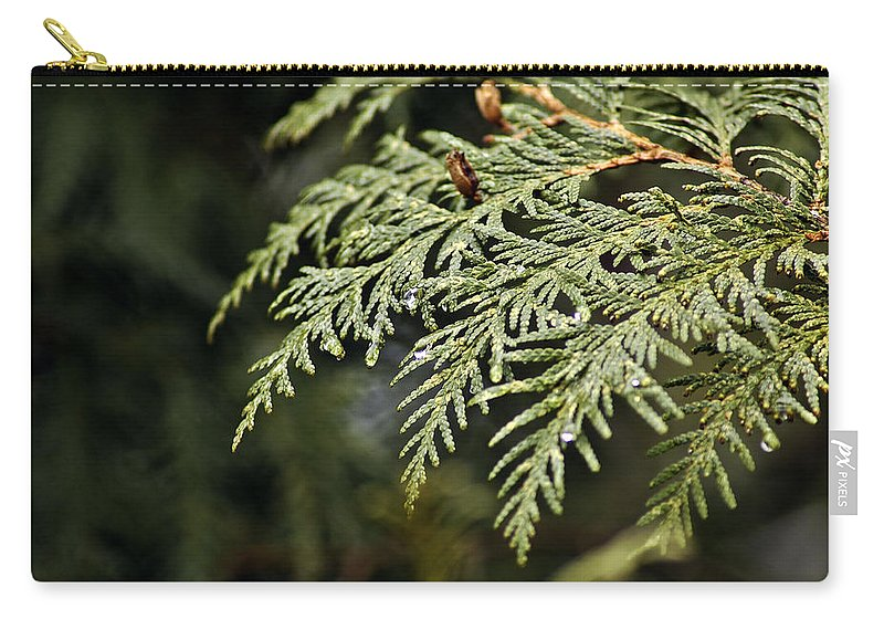 North America Carry-all Pouch featuring the photograph Cedar Due Droplets by LeeAnn McLaneGoetz McLaneGoetzStudioLLCcom