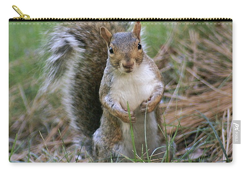 Squirrel Carry-all Pouch featuring the photograph Checking Things Out by Ben Upham III