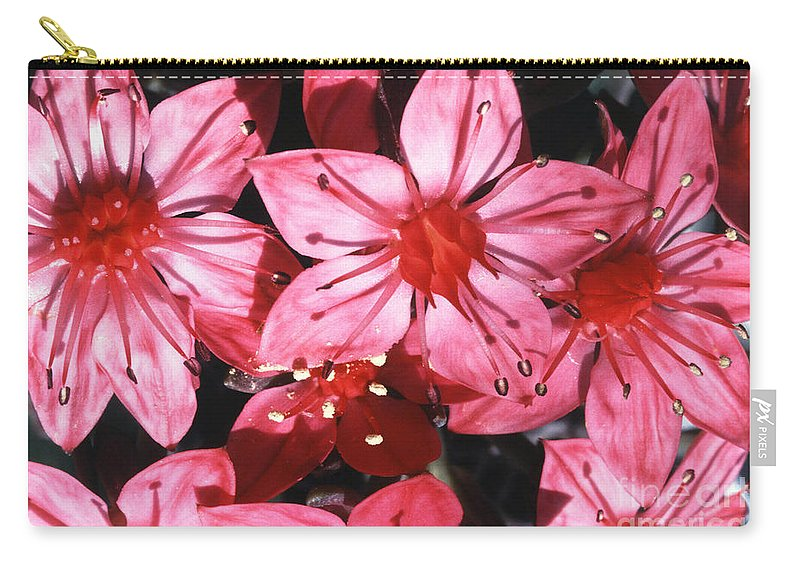 Plant Carry-all Pouch featuring the photograph Chihuahua Flower by Science Source