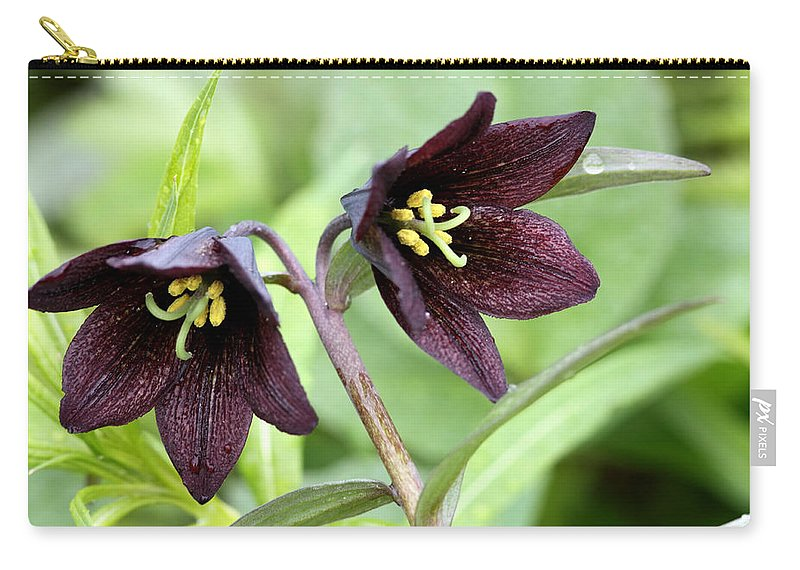 Doug Lloyd Carry-all Pouch featuring the photograph Chocolate Lilly by Doug Lloyd