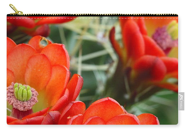 Cactus Carry-all Pouch featuring the photograph Claret-cup Cactus 2am-28736 by Andrew McInnes